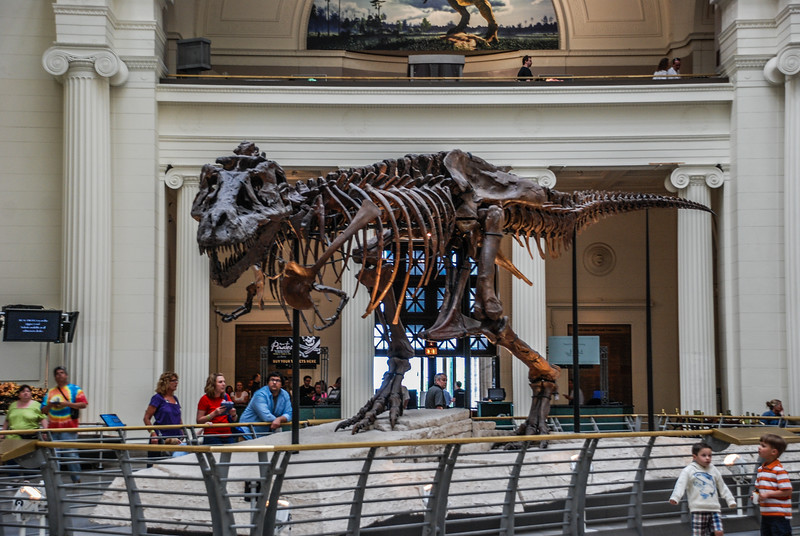 The Field Museum