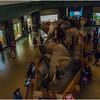 American Natural History Museum