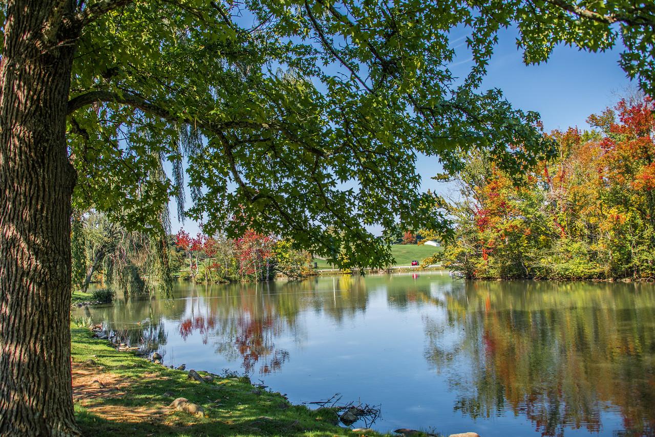 VT Duck Pond