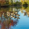 Duck Pond at Virginia Tech