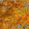 Fall in SW Virginia