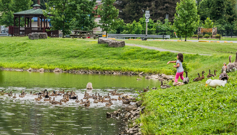 At the Duck Pond
