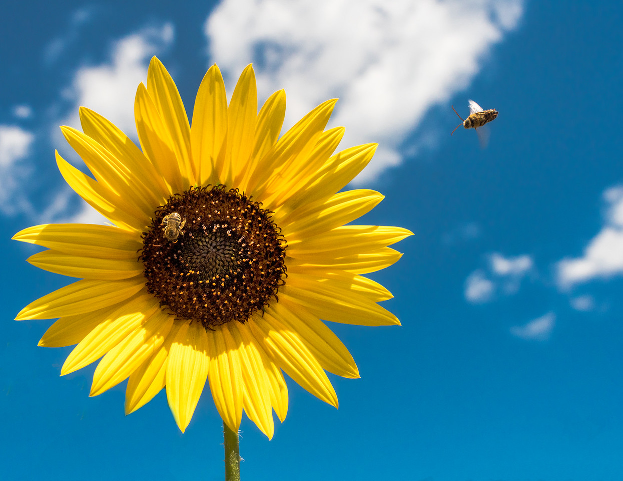 Sunflower & Friends