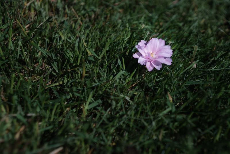 Dropped blossom