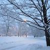 Redwood snowstorm