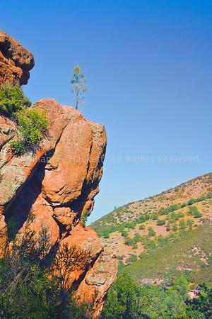 """""""Perseverance,"""" Bear Gulch Trail0597"""