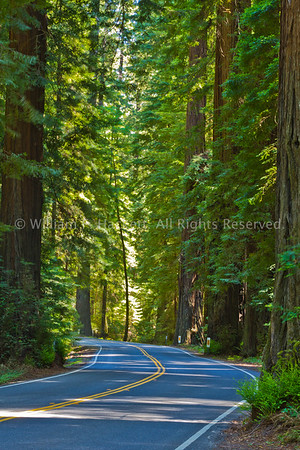 Avenue of the Giants6464