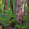 Big Basin Redwoods SP2707