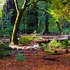 Big Basin Redwoods SP2628