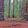 Big Basin Redwoods SP2820