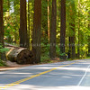 Avenue of the Giants6480