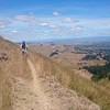 Te Mata Peak MTBing