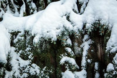 Spruce over cedar