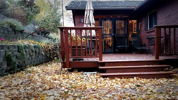 Deck sealed,  leaves next..