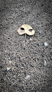 Alien on rain spattered sand