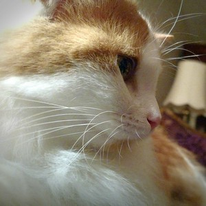 Gingie, getting attention late in the day.