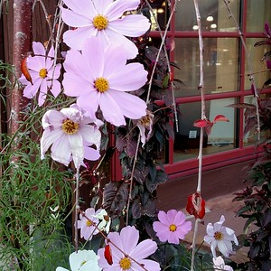 Nature's confused: Cosmos at Hogle zoo, 13nov16