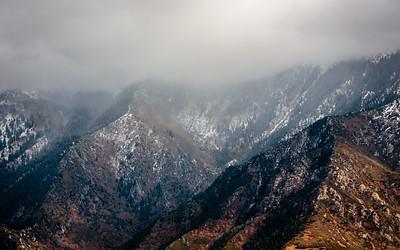 Aspen grove murky with snow flurries