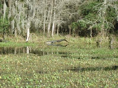 Some Florida Wildlife