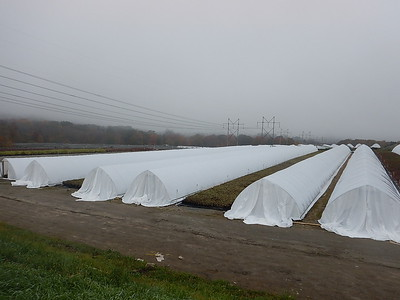 7  HOOP HOUSES ARE DRAPED