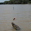 Teasing the croc
