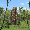A cathedral termite mound. There are a lot of these all over the park