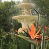 Bird of paradise in the Carlton Gardens