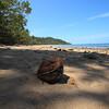 A coconut at Bingil Bay!
