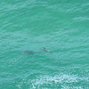 Dolphins out near Cape Byron