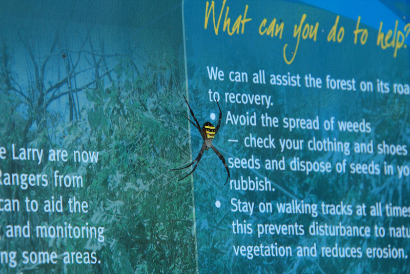 Colorful and large spider on the park sign.