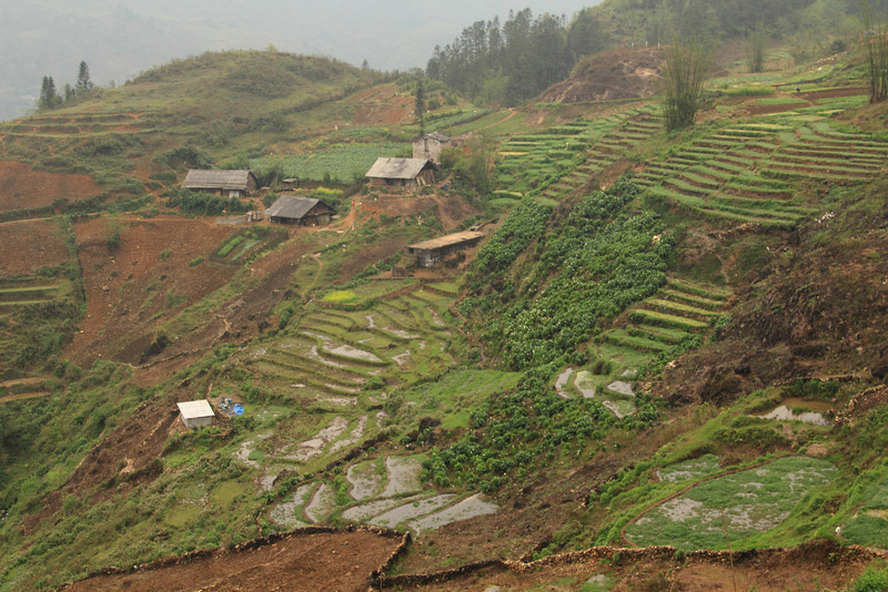 Terraces and houses