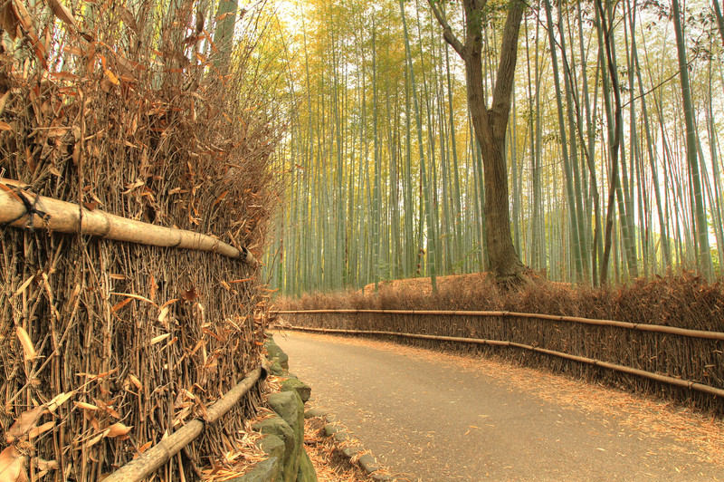 Road through the bamboo forest