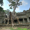 Silk-cotton tree. Although it looks like it's causing the gopura to sag, its roots are actually holding the stones up.