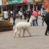 An alpaca!