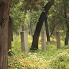 There are 78 generations of descendants of Confucius, with over 100,000 graves, some over 2,000 years old.