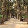Main walkway to Confucius's grave