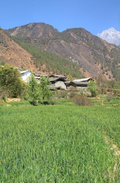 Nuoyu Village rice terraces