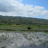 Rice fields with mountains in the background, on our bike ride