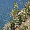 Down the cliff from Corniglia