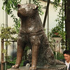 Hachiko in Shibuya. He waited for his late master here every day from 1923 to 1935.