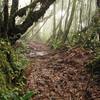 Trekking through the very muddy mossy forest.