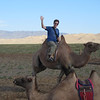 Up on the camel