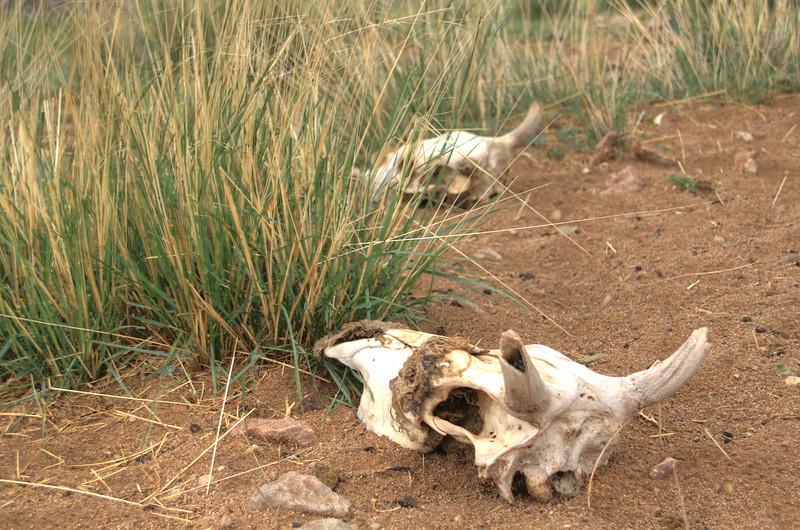 Bones of less-fortunate creatures