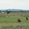 Gigantic vultures gathering around a dead creature