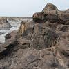 Petrified tree stump at Curio Bay