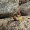 A chipmunk!