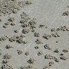 Many crabs' holes on the beach at low tide. They really like creating these tiny sandballs.