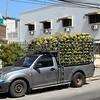 The melon truck
