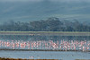 Lesser flamingoes (Phoeniconaias minor) on Lake Magadi