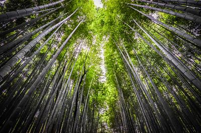 The magical bamboo forest of Arashiyama, Japan.